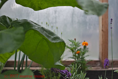 Greeenhouse Life (Muzzola) Tags: greenhouse