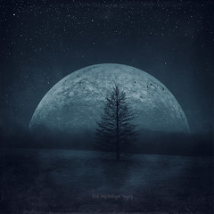 moon twilight (Dyrk.Wyst) Tags: deutschland frühjahr germany landschaft wuppertal atmosphere earlyspring landscape lonetree meadow misty mood nature outdoor silhouettes wilderness