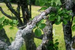 Black Forest (Wim Ederveen) Tags: blackforest schwarzwald germany tree moss trees baum bomen deutschland