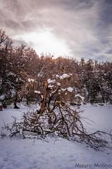 _DSC5483 (m4ur0nqn) Tags: nikon neuquén nieve landscape patagonia d5100