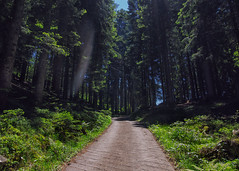 Wood's path (SophieHazel) Tags: natura nature landscape forest woods bosco foresta paesaggio green magic enchanted lights