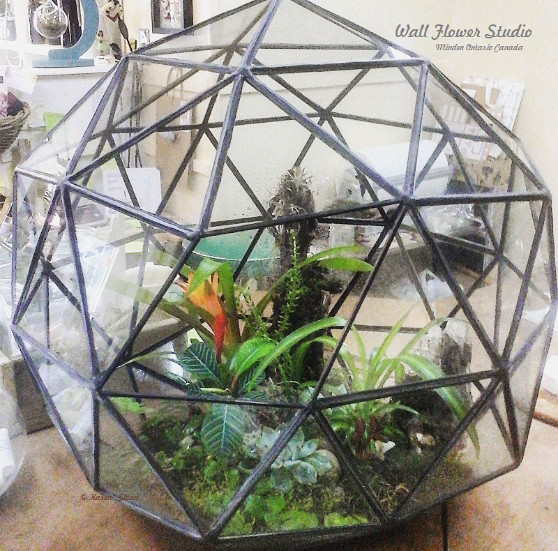 The World S Most Recently Posted Photos Of Glass And Terrarium