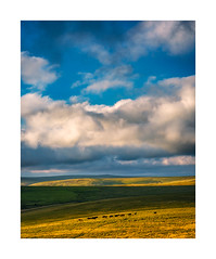 Langstone Moor, Dartmoor, Devon, UK (SimonHMiles) Tags: dartmoor moor moorland heath upland sunset sky clouds cows pastoral
