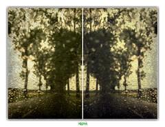 HAPPY WHEN IT RAINS (régisa) Tags: rain pluie arbre alignement alignment tree diptyque voisinslebretonneux thejesusandmarychain