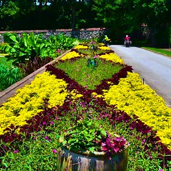 More of the gardens! (Edale614) Tags: biltmore northcarolina flowers nature roses