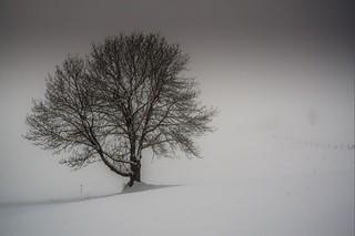 Haute-Savoie, Mont-Blanc, 20
