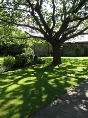 Almshouses garden (Nekoglyph) Tags: kirkleatham redcar cleveland teesside almshouses garden green grass trees shadows sunlight shrubbery