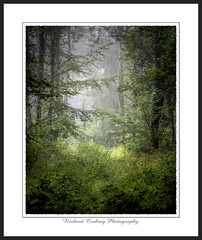 Selhurst Park (Chalky666) Tags: tree trees wood woodland fog mist southdowns westsussex painterly landscape art
