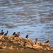 seabirds [ahninga ahninga]