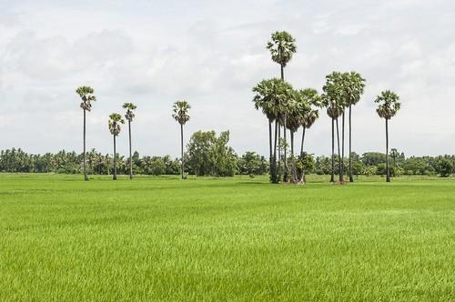 singburi - thailande 1