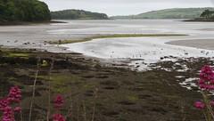 Game Of Thrones film location (lifeonnosense) Tags: strangfordlough northernireland ireland conservation wildlife windpower rowing gameofthrones game of thrones