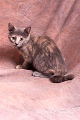 """Kelly"" female - Looking for Furever Home (ms godard) Tags: debbiegodard nikond700 escc barc animals adoption rescue baldwin humane society"