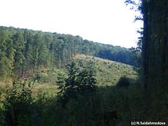 Вырбка_в_дубовом_лесу