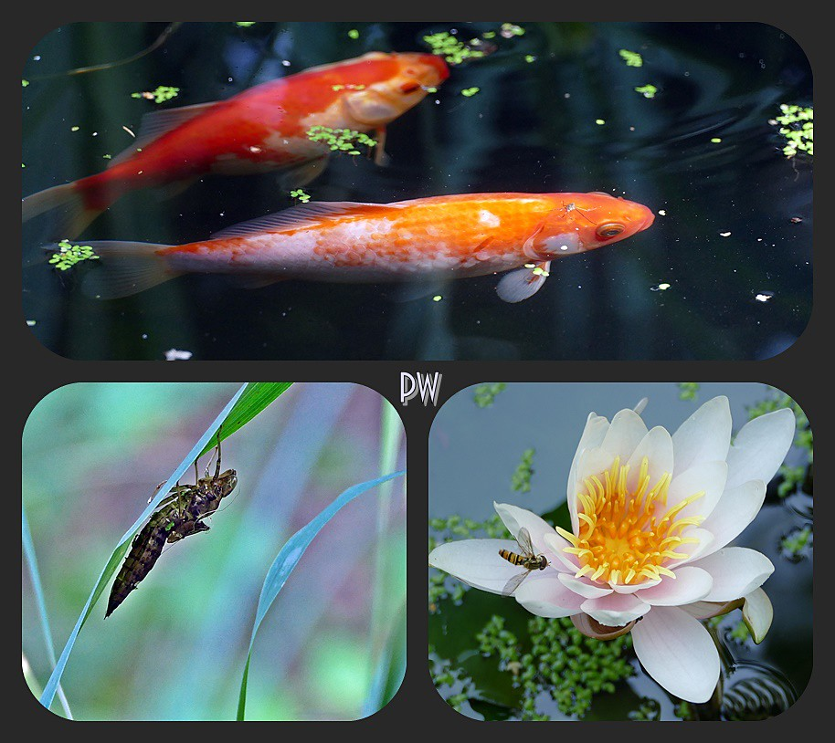 The world 39 s best photos of fische and garten flickr hive for Gartenteich fische