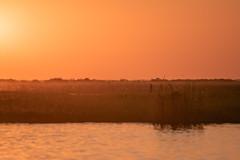 Fishers in the sunset (knipslog.de) Tags: fisher mokoro sunset nature botswana botsuana safari adventure wildlife wild animals selfdrivesafari