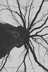 Ausblick nach oben (One-Basic-Of-Art) Tags: annewoyand woyand anne 1basicofart onebasicofart fotografie foto photographie mono einfarbig monochrom monochrome black white schwarz weis weiss grau gris grey noir blanc baum tree äste ausblick fantastisch