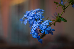 Bella Italia (hploeckl) Tags: italy desenzano sunset flower bokeh nikon 5018 prime