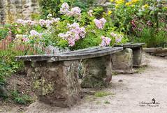 secret garden (Schneeglöckchen-Photographie) Tags: secret garden garten natur