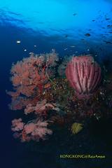 Forest in the Blue (kayak_no1) Tags: nikon d800e nauticamhousing 15mmsigmafisheye fisheye ysd1 underwater underwaterphotography wa wideangle diving scubadiving uw rajaampat indonesia spongycoral seafan gorgonians