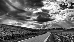 On the road (ZeGaby) Tags: avenayvaldor blackandwhite champagne lx15 landscape lumix mutigny paysages vines vineyards