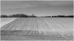 19042015-IMG_7361 (Renaud Mertens) Tags: paysage campagne landscape noiretblanc nb nature champ fielf blackandwhite bw ngc