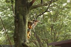 子猿たちの狩場 (しばけんしらはどり) Tags: canon x7 animal safari