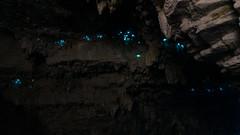 Waitomo (ericducourneau) Tags: newzealand travel landscape beach mountain volcano explore birds animals roadtrip adventure hiking trek cave glowworms tongariro