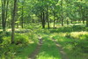 Quehanna Trail (DavetheHiker) Tags: pennsylvania pa clearfieldcounty pennsylvaniawilds pawilds hiking trail quehannatrail qt trees nature forest outdoors stateforest pennsylvaniastateforest moshannonstateforest quehannawildarea