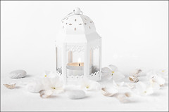 Proyecto 205/365 (Art.Mary) Tags: vela luz lumière light canon bodegón stilllife naturemorte proyecto365 blanco blanc white bougie candle flowers fleurs flores conchas coquillages shells piedras stons pierres