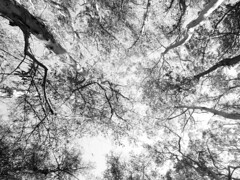 stern grove (leftoverking) Tags: stern grove