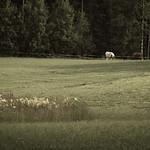 On the Pasture thumbnail