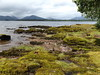 View north from Inchcailloch, Balmaha, Stirling, Scotland, 26 July 2017 (AndrewDixon2812) Tags: inchcailloch island loch lomond balmaha stirling scotland mountains