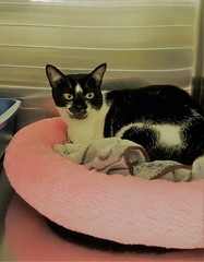 Anne Marie - 3 year old spayed female