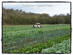 Fordsdale Organic Farm pic2