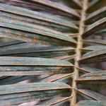 Oil palm thumbnail