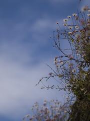 Sur le mur (Titole) Tags: wall plants titole nicolefaton sky clouds weeds vergerettes érigéron below