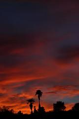 Sunset July 26 2017 #45 (Az Skies Photography) Tags: sun set sunset dusk twilight nightfall cloud clouds sky skyline skyscape skycandy skyfire red orange yellow gold golden salmon black canon eos 80d canoneos80d eos80d rio rico arizona az riorico rioricoaz arizonasky arizonaskyline arizonaskyscape arizonaskycandy arizonaskyfire july 26 2017 july262017 72617 7262017