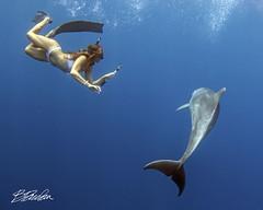 More of Alishiya (bodiver) Tags: hawaii wideangle ambientlight peopleunderwater mermaid blue ocean fins freediving apnea