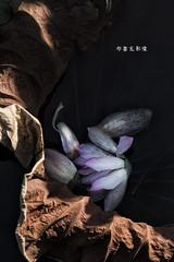 D67_0046 (brook1979) Tags: 植物園 台北市 荷花 花 蓮 蓮花 葉 荷葉 lotus flower