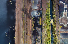 4816072017 (2c..) Tags: 2c 2cimage abstract ireland peat land water kildare landscape sky cloud drone dji p3 overhead irish bog moor tree
