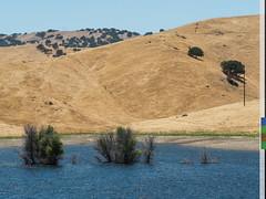 San Luis Reservoir 27a (citizenlouie) Tags: 2017 bw california hollister northerncalifornia omdem5mkii olympus sanluisreservoir summer blackandwhite handheld hills landscape postprocessed submerged tree trees water unitedstates us