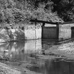 Basingstoke Canal Deepcut 18 July 2017 (12) thumbnail