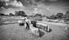 Beetle, Whitstable (Aliy) Tags: beetle wooden sculpture carving artwork whitstable path saxonshoreway coast