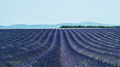Plateau Valensole III (moni-h) Tags: hauteprovence landscape landschaft lavendelfelder olympusm14150mmf4056ii olympusomdem5markii paca plateauvalensole provence südfrankreich puimoisson provencealpescôtedazur frankreich fr