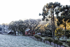 geada (Miriam Cardoso de Souza) Tags: geada fri inverno winter brasil riograndedosulphoto natureza gelo picture