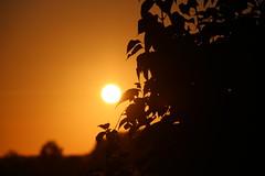IMG_8359 (PURÊN MICHEL 49) Tags: ciel soleil leverdesoleil