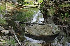 hill 41 (beauty of all things) Tags: belgien belgium hohesvenn eupen hill bach creek