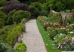 Riverhill Gardens @ Sevenoaks (Adam Swaine) Tags: riverhillgardens rosegardens roses english england kent flora flowers summer seasons naturelovers nature paths ukcounties uk britain rose colours