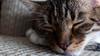 Churro (RooBendlin) Tags: cat cats pets pet animal canon churro