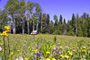 Flowers,Shasta (svubetcha) Tags: landscape flowers arizona sunset bridge hourse mission gas utah